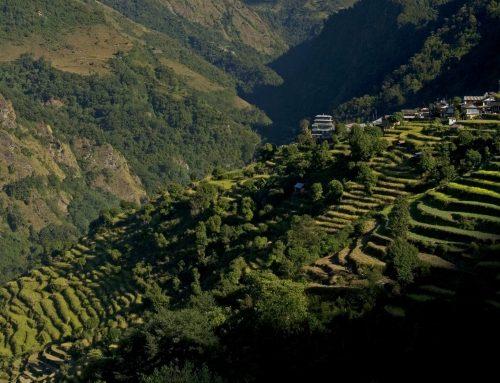 Tee vom Dach der Welt