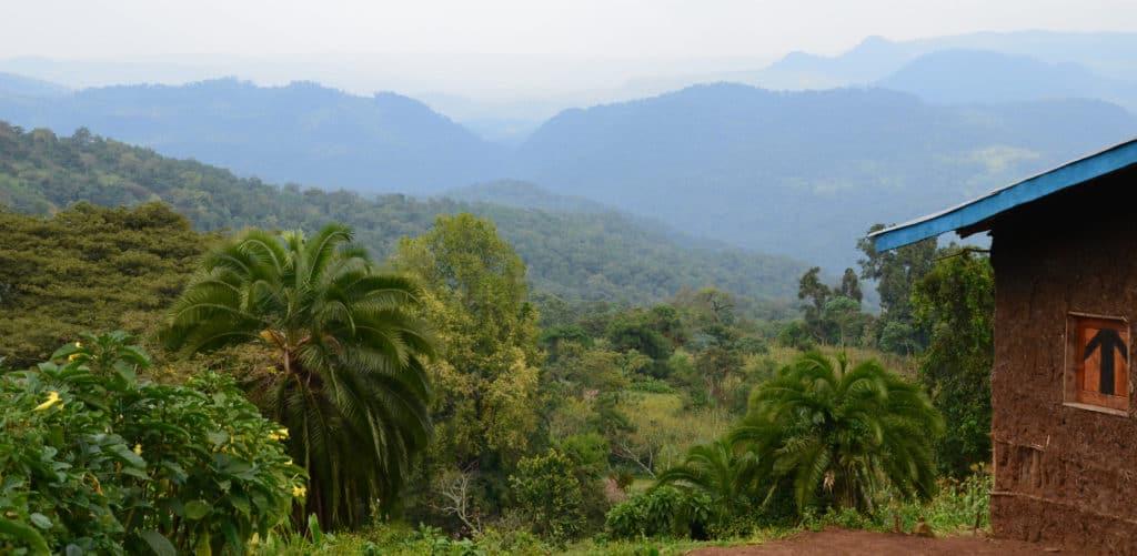 Blick über den Bergregenwald in Kaffa